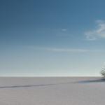 Lone Yucca, White Sands National Monument, 2014